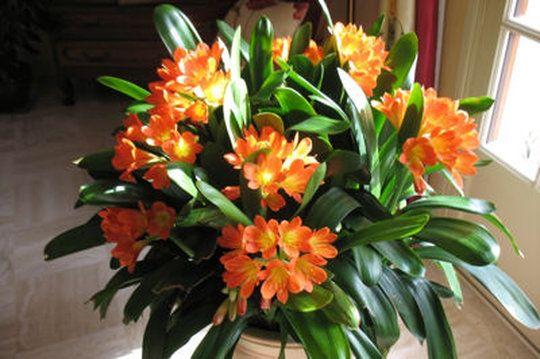 ces plantes d 39 int rieur qui supportent l 39 obscurit flore tropicale pinterest plants indoor. Black Bedroom Furniture Sets. Home Design Ideas
