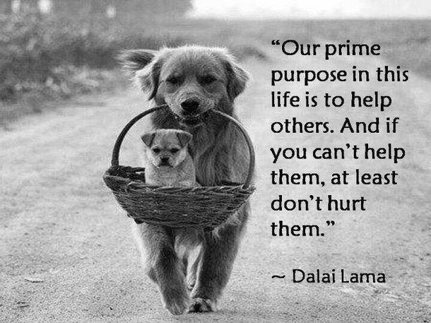 Image result for dalai lama on how you treat animals