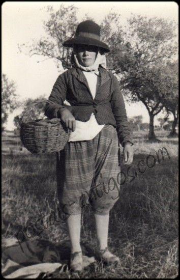 Apanhadeira de azeitona , Evora   Edição Gama Freixo - anos 1950/60           Limpando azeitona           Apanha da Azeitona       A...