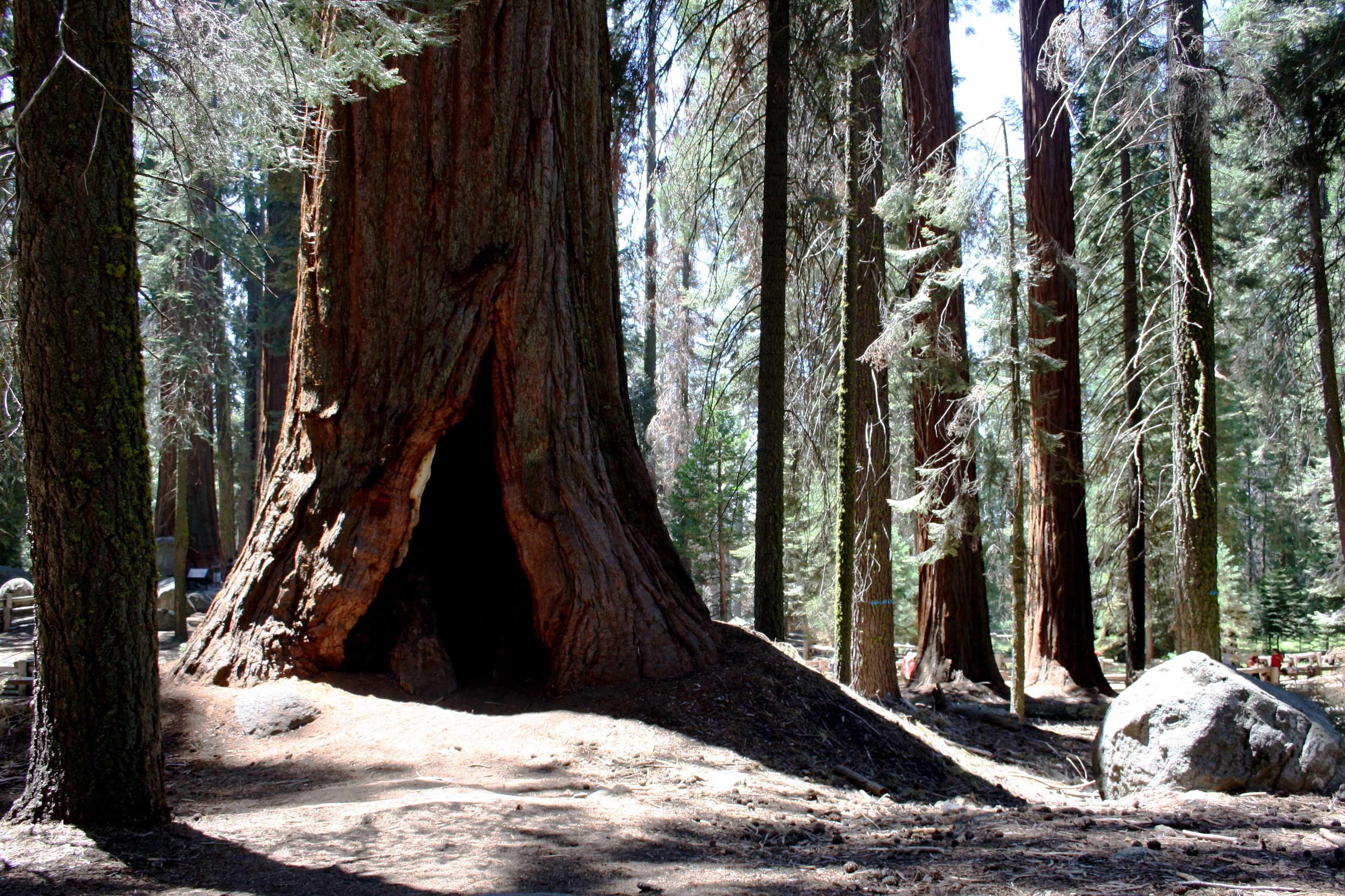 Il sogno americano: Sequoia National Park