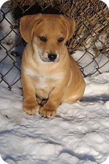 Fond Du Lac Wi Dachshund Basset Hound Mix Meet Radar A Puppy