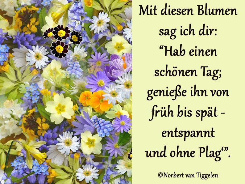Blumen Gruss Schonen Tag Wunschen Guten Morgen Gruss Schone Blumen Bilder