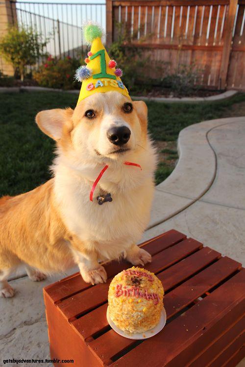 Dog Happy Birthday Scott Cake