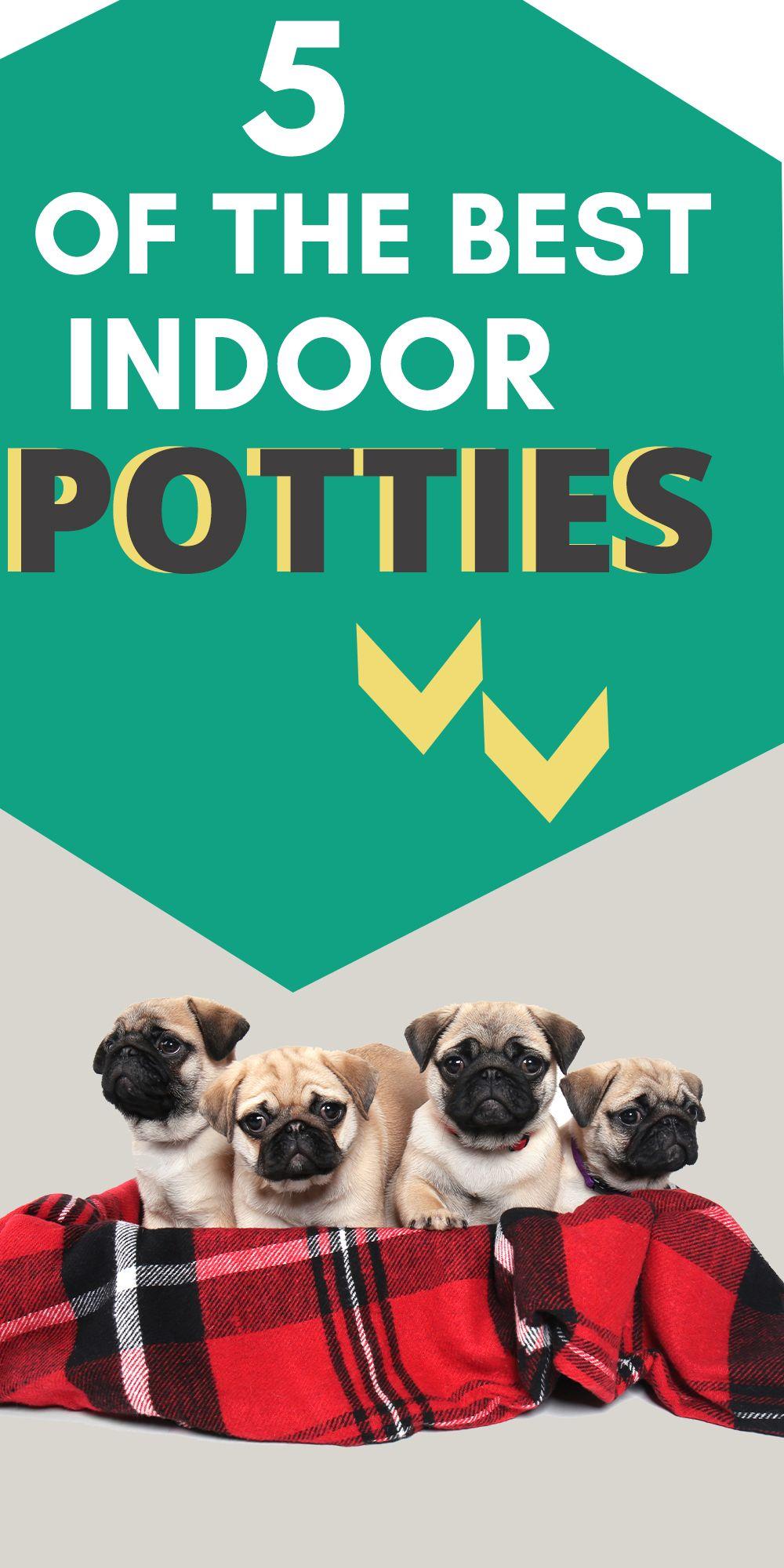 Best litter box for pugs in 2020 dog litter box best
