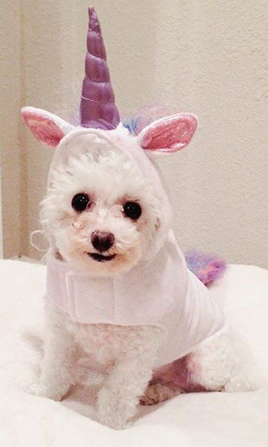 60 Pet Costumes To Diy On The Cheap Pet Costumes Diy Dog