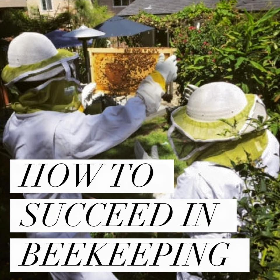 How To Raise Bees In Your Backyard