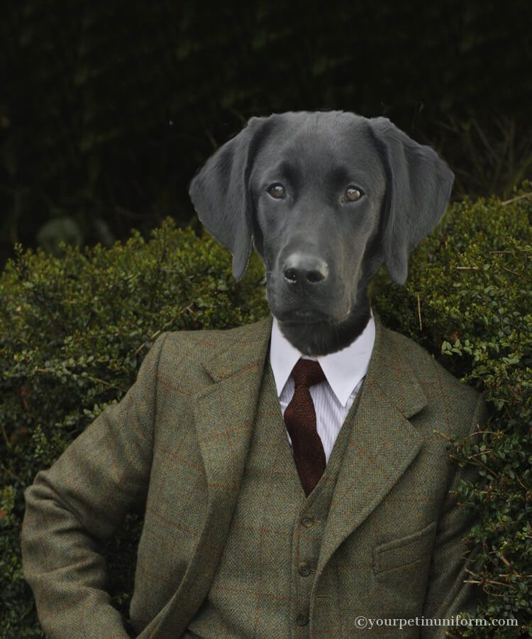 Black Labrador in Tweed, a modern portrait for a heroic dog  #blacklabrador #labrador Gallery | yourpetinuniform.com