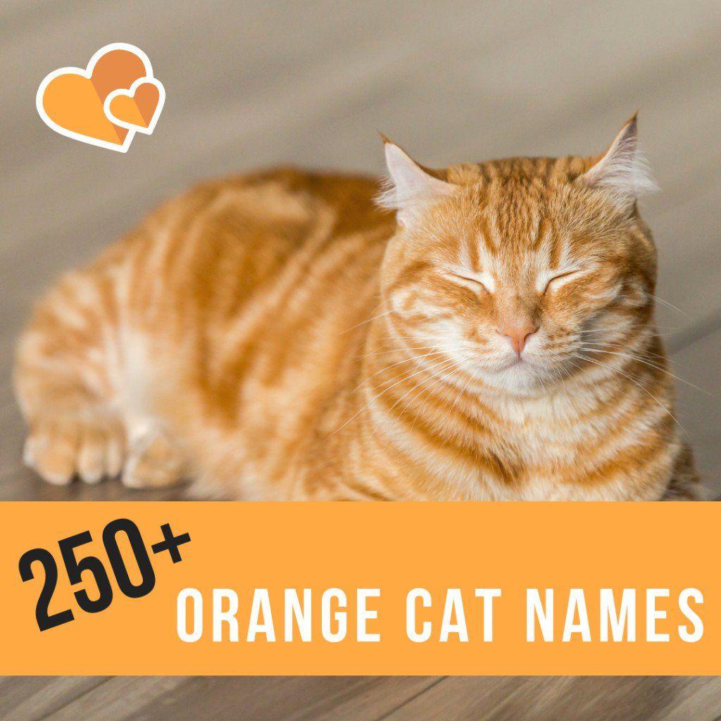 250 Best Name Ideas For Orange Cats Girl Cat Names Boy Cat