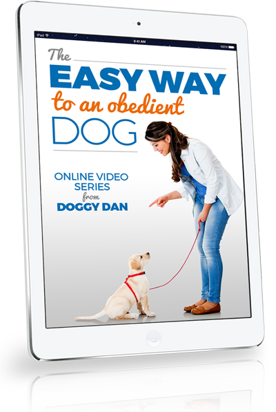 Free Dog Training Videos Expert Videos To Stop Dog