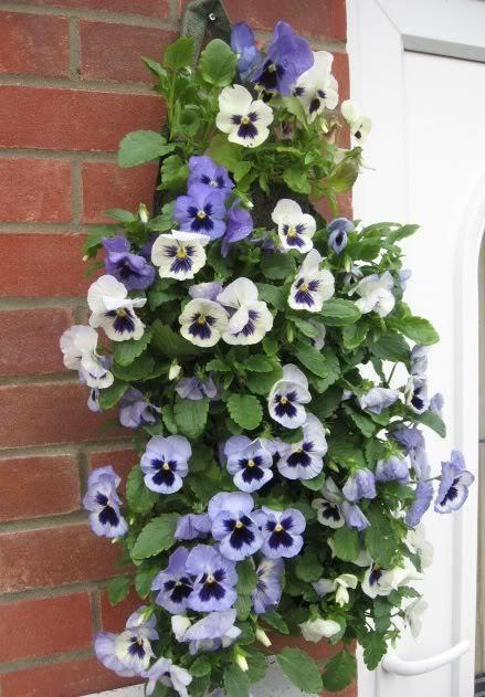Http Www Ebay Co Uk Itm Hessian Flower Pouch Bag Basket Wall Fence Hanging Geraniums Petunias Pansy 151614283650 Plant Bags Hessian Flowers Hanging Plants