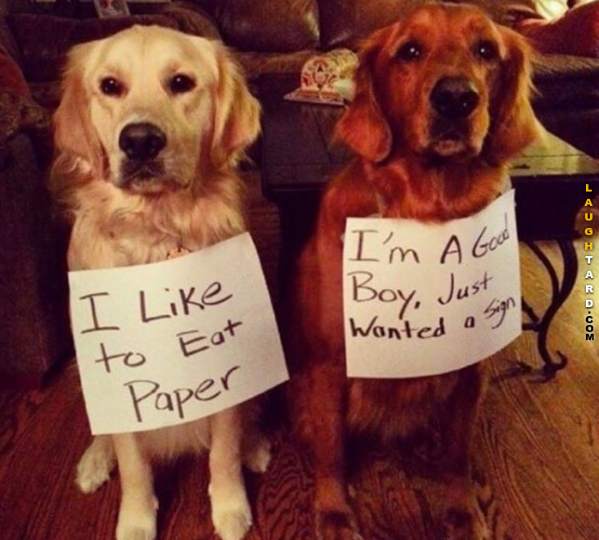 31 Funny Pictures Of The Day