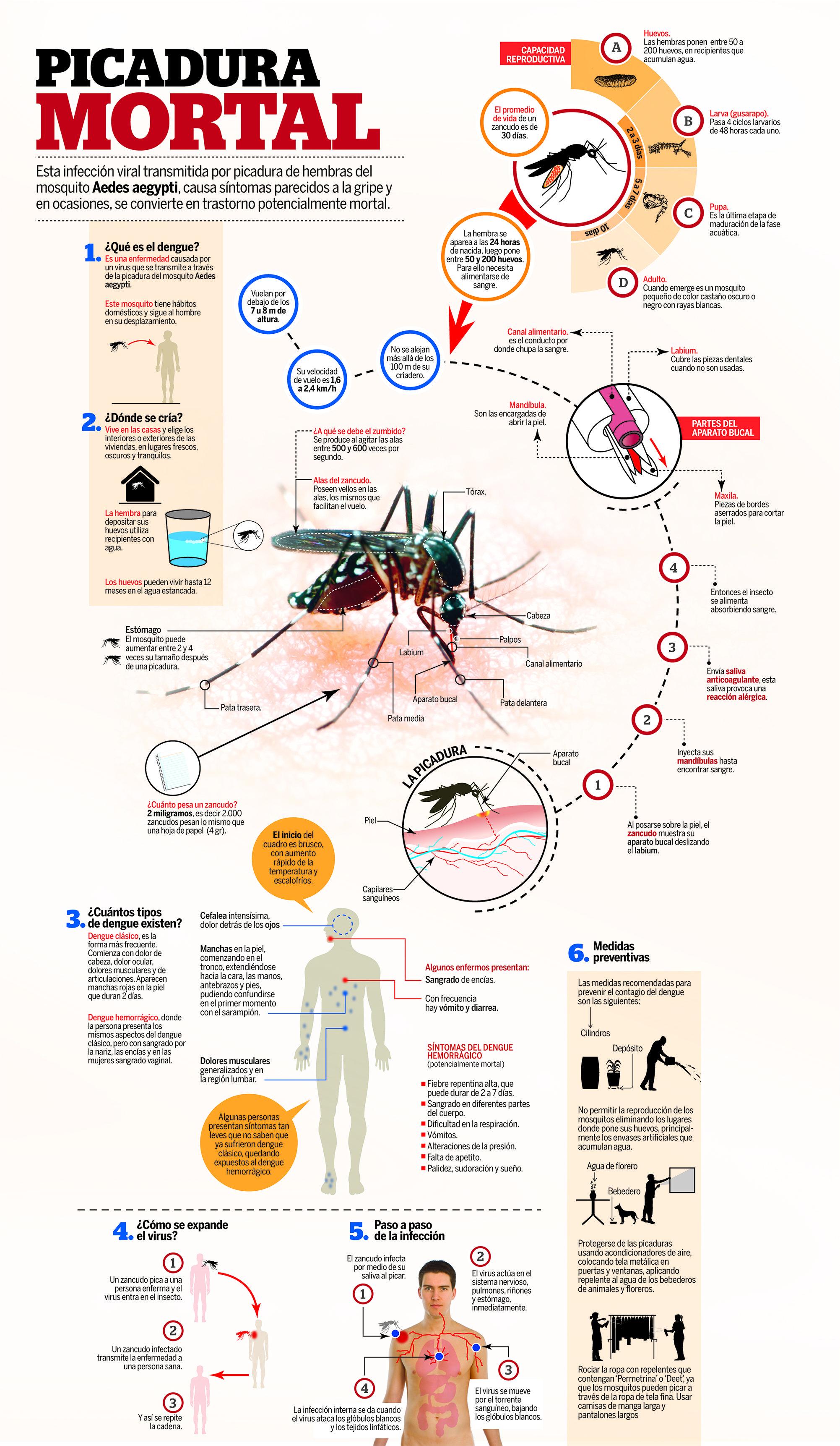 Esta infección viral transmitida por picadura de hembras