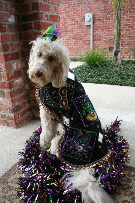 Mardi Gras Costume Mardi Gras Dog Mardi Gras Costumes Mardi