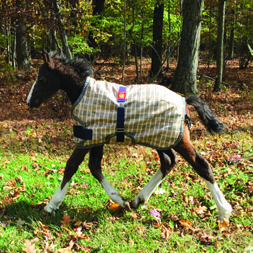 200 Fill Expand-O-Blanket Foal/Pony Turnout   Baker Curvon
