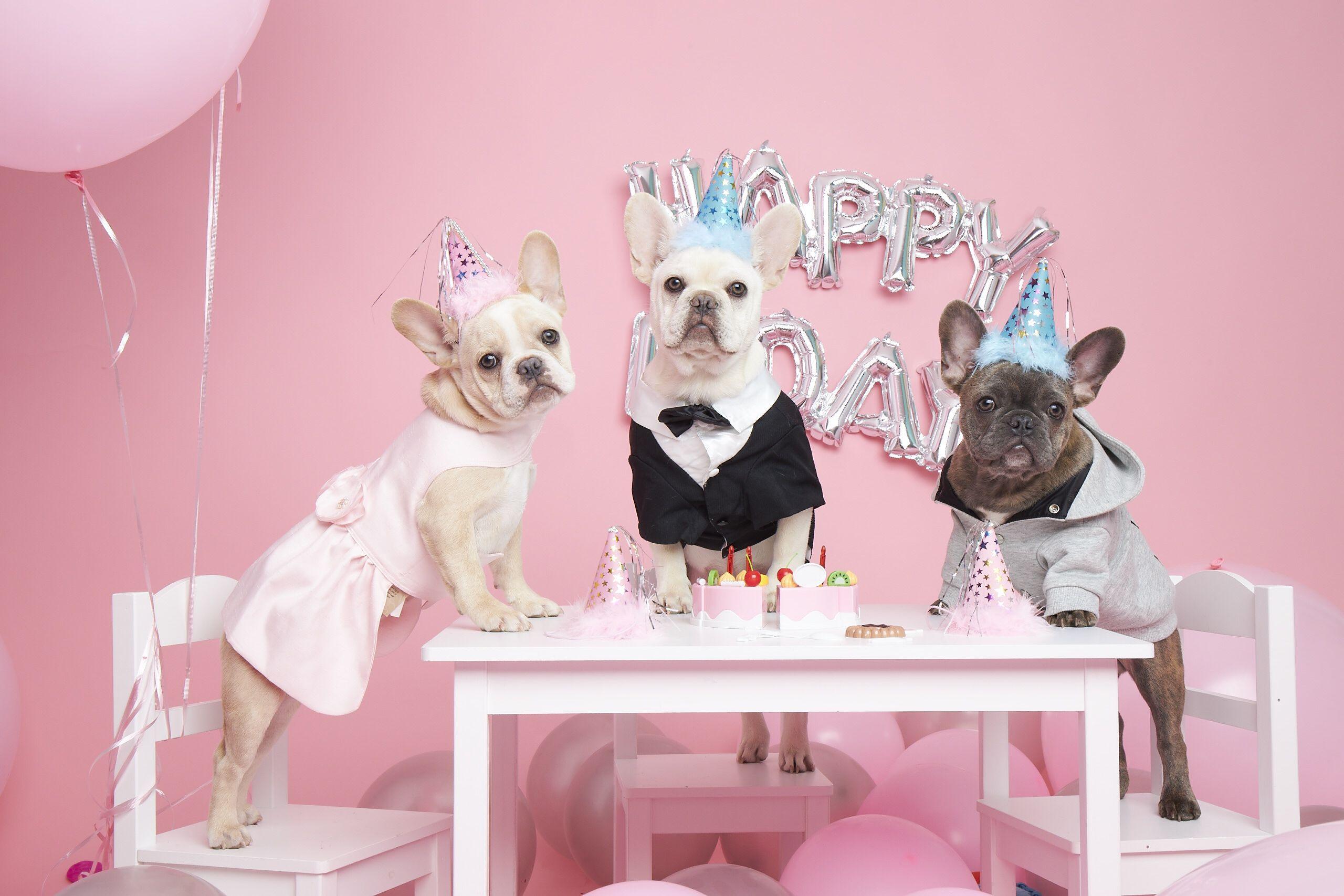 Frenchie Birthday Party Happy Birthday Dog Dog Birthday Animal