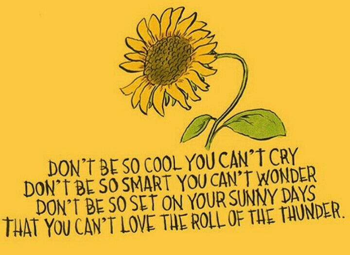 Sunflower Quotes Sunflower quotes | legibly beautiful | Quotes, Words, Words quotes Sunflower Quotes