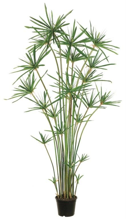 this lovely potted plant is an artificial umbrella papyrus