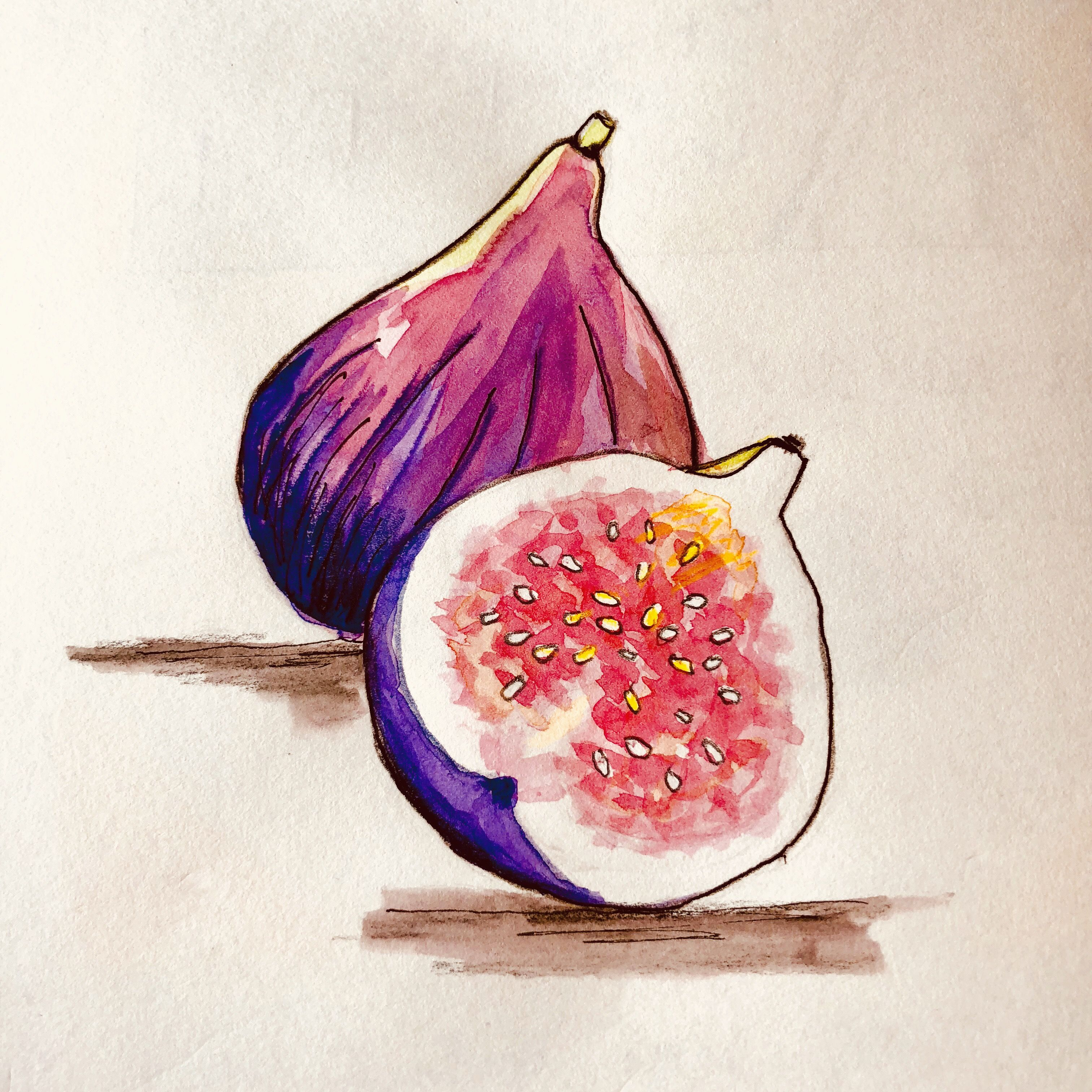 Figues Aquarelle Et Encre Fruits Aquarelle Watercolor