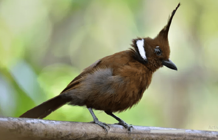 Penyebab Dan Cara Mengatasi Burung Cililin Macet Bunyi Little Birds Wild Birds Beautiful Birds