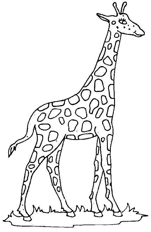 Coloring Pages Giraffe Cute Giraffe Coloring Pages Giraffe Coloring Pages Giraffe Colors Giraffe Pictures