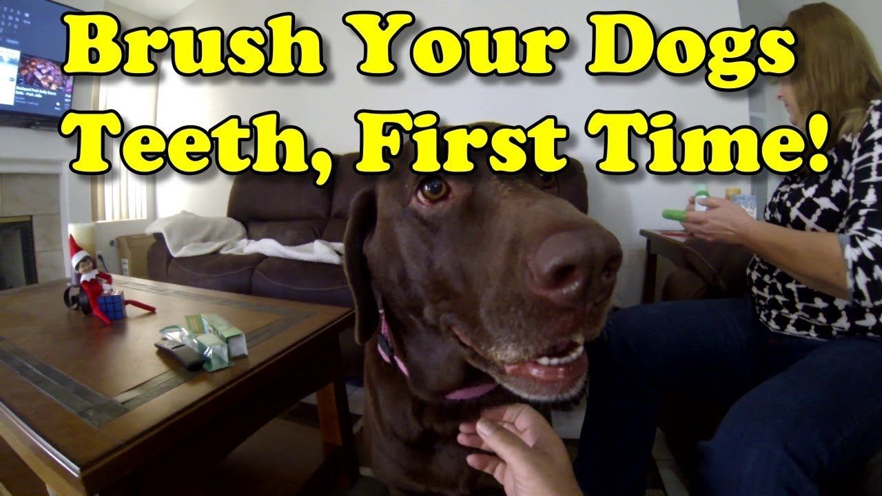 Brush Your Dogs Teeth, First Time For Cinder, Our