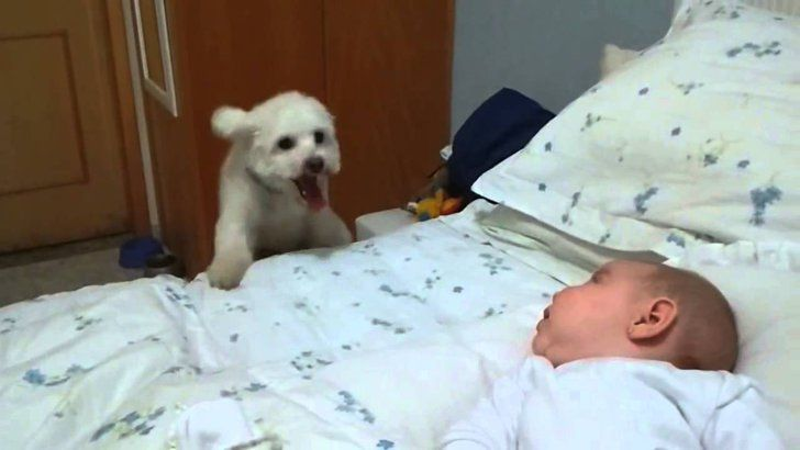 Pin for Later: Babies + Puppies = A Whole Lot of Cuteness Where's the Baby? This puppy is too excited to meet the newest addition to his family.