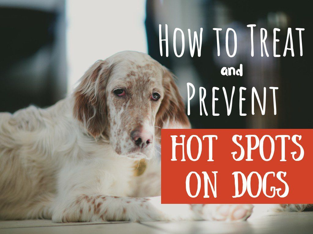 How To Treat Your Dog S Hot Spots At Home Without A Vet Dog Hot