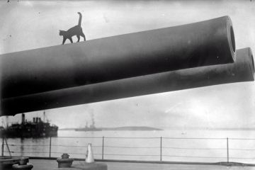 a photo graph of a cat walking on a canon