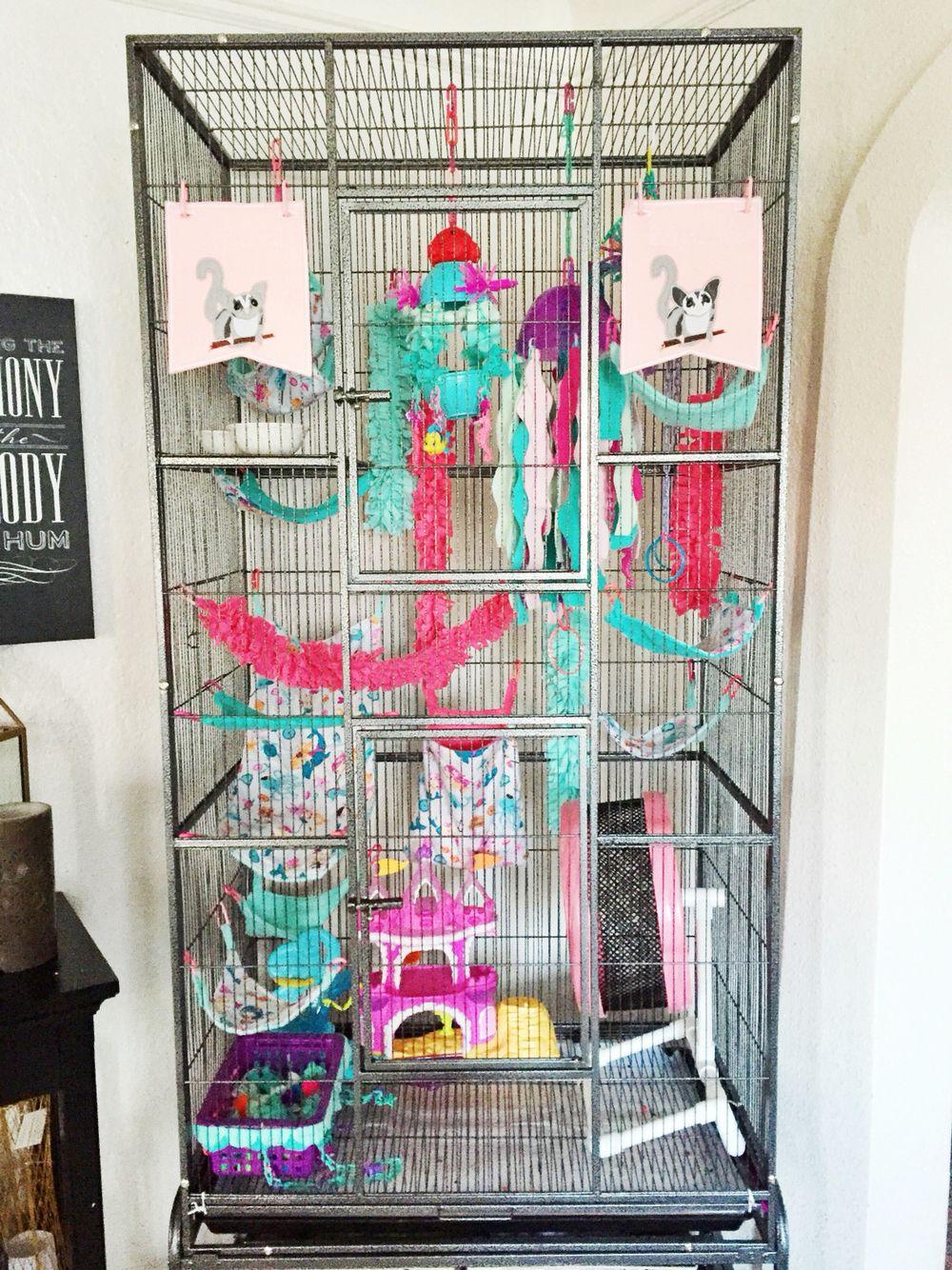 Our Girls Sugar Glider Cage Sugar Glider Pet