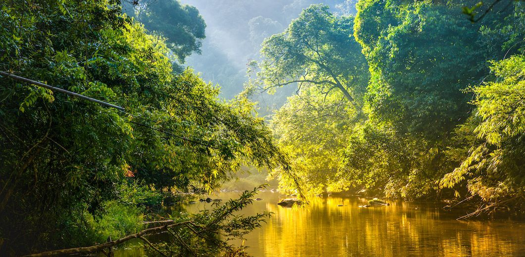7 Largest Forests In The World Scenic Views Scenic