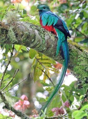 世界一美しい鳥「ケツァール」 , NAVER まとめ