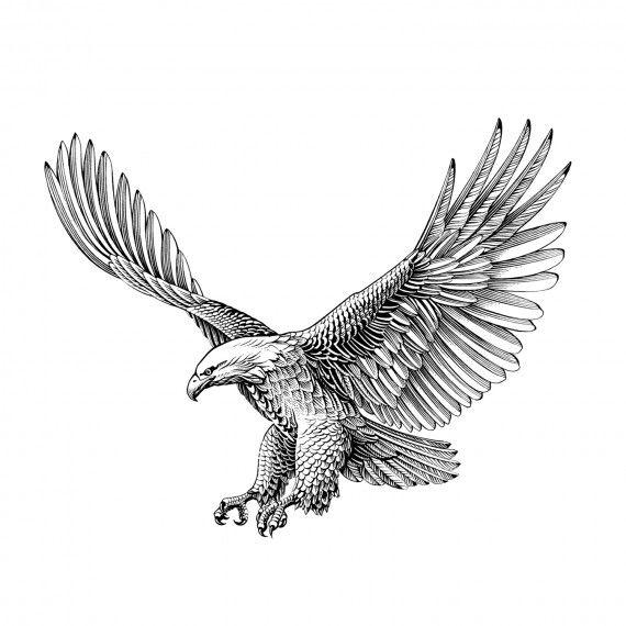 рисунок орла в полете фото севастопольских