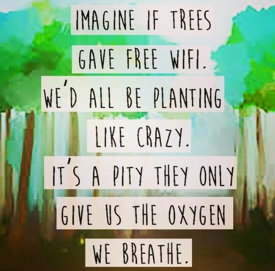 Environment Quotes Stunning Trees Environment Quotes Breathe Pinterest Environment