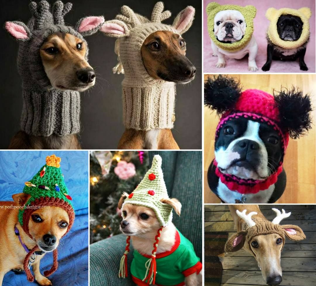 Crochet Dog Hat Free Patterns with Video | Mascotas, Tejido y Ropa ...