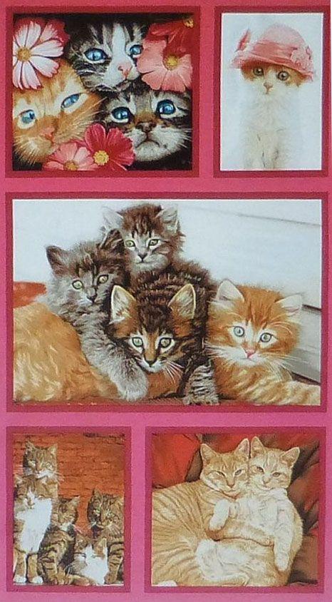 Title Huggers Tabby Cat Wild Republic Size Measures 8