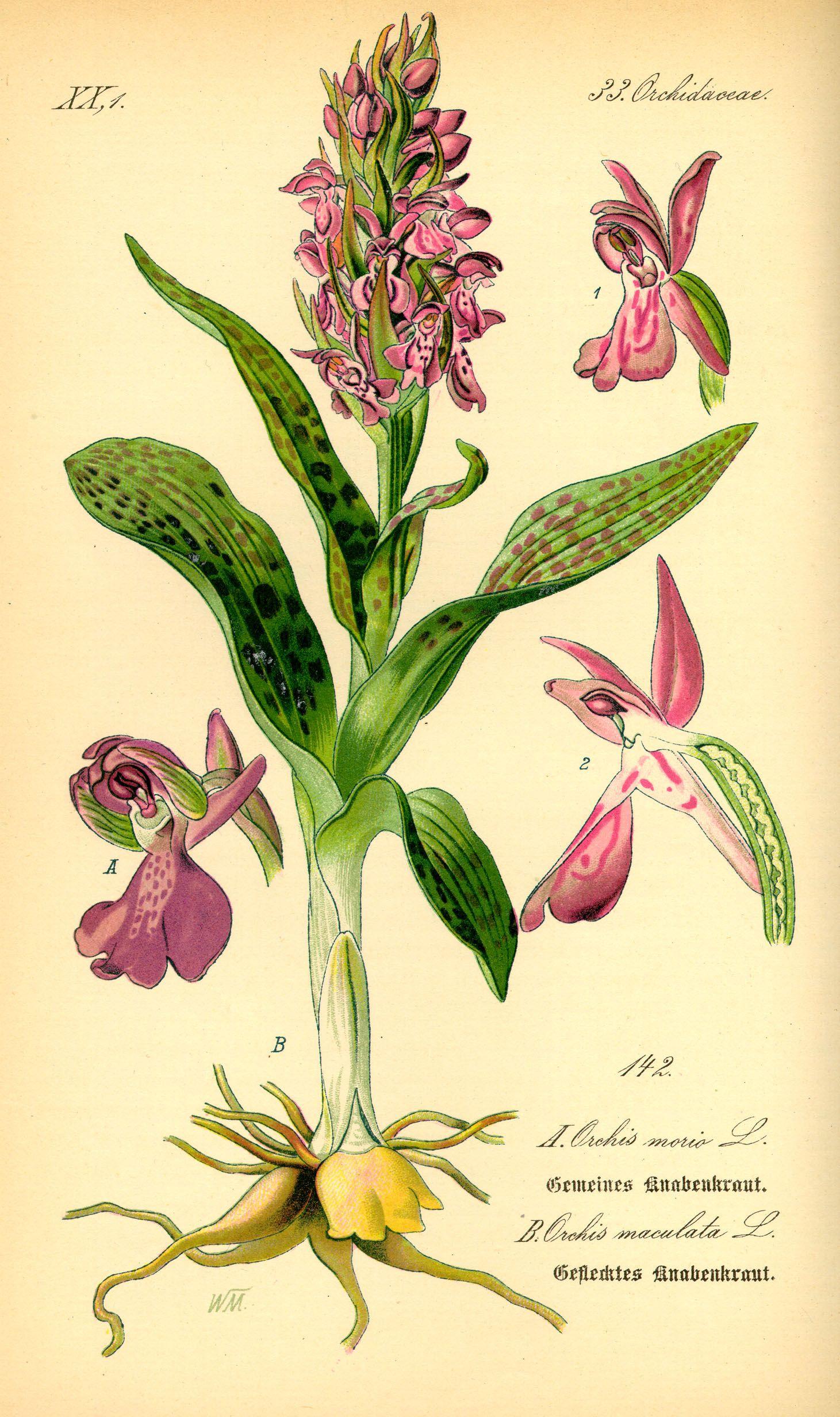 ботаническая энциклопедия растений с иллюстрациями такое фюзеляж