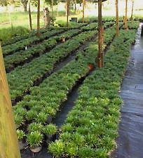 Most Popular Ground Cover Plants | eBay