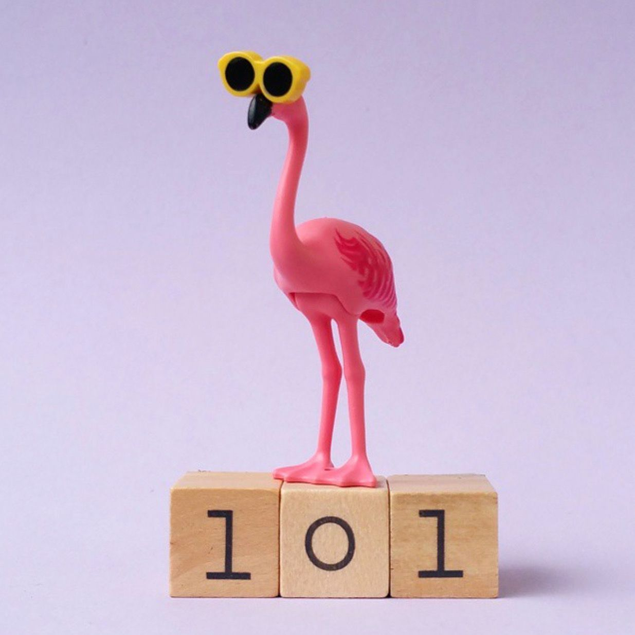 Pin By Cecily Bochannek On Pink: Flamingo, Pink Flamingos Y