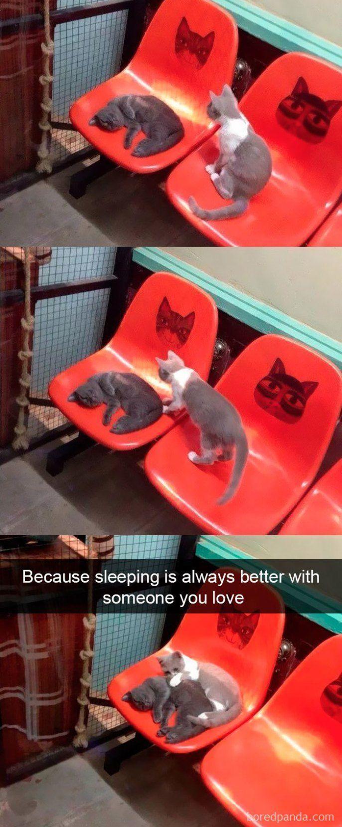 25+ Funniest Cat Snapchats That Will Leave You With The Biggest Smile - Mariska Vogelenzang de Jong - Katzen -