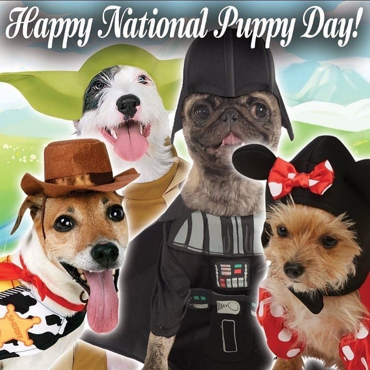 Huge range of dog and cat costumes available at  & Happy national puppy day!! Huge range of dog and cat costumes ...