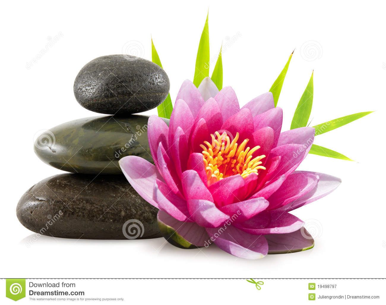 Lotus Flower Bomb Choice Image Flower Wallpaper Hd