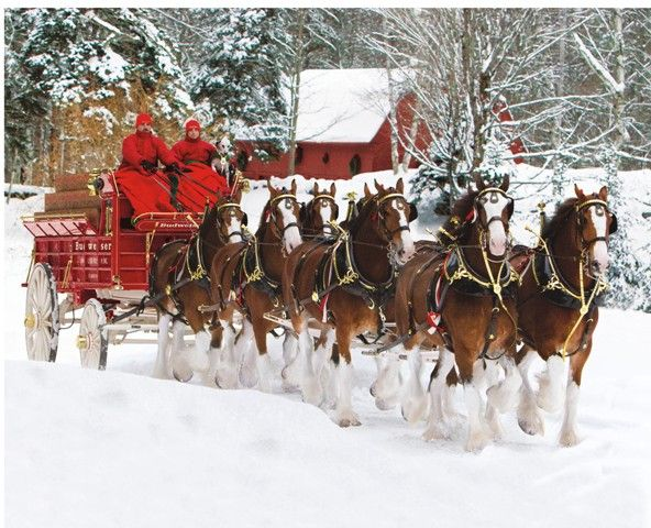 christmas clydesdales � classic clydesdales pinterest