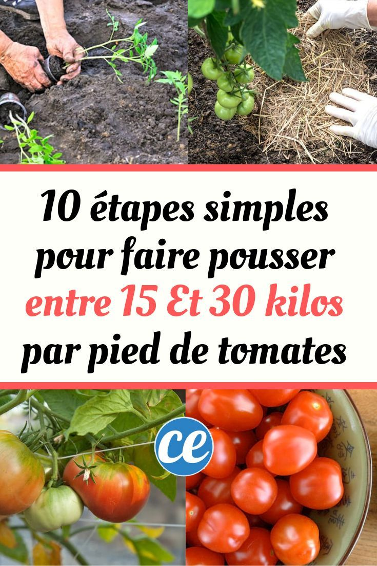 10 Étapes Simples Pour Faire Pousser Entre 15 Et 30 Kilos