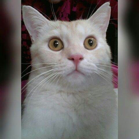 Ommggg! Taking his own selfie...! (With images) Cat