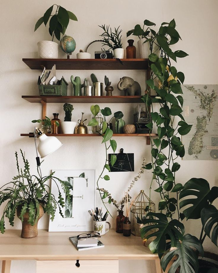 Photo of How To Take Insta-Worthy Photos Of Your House Plants