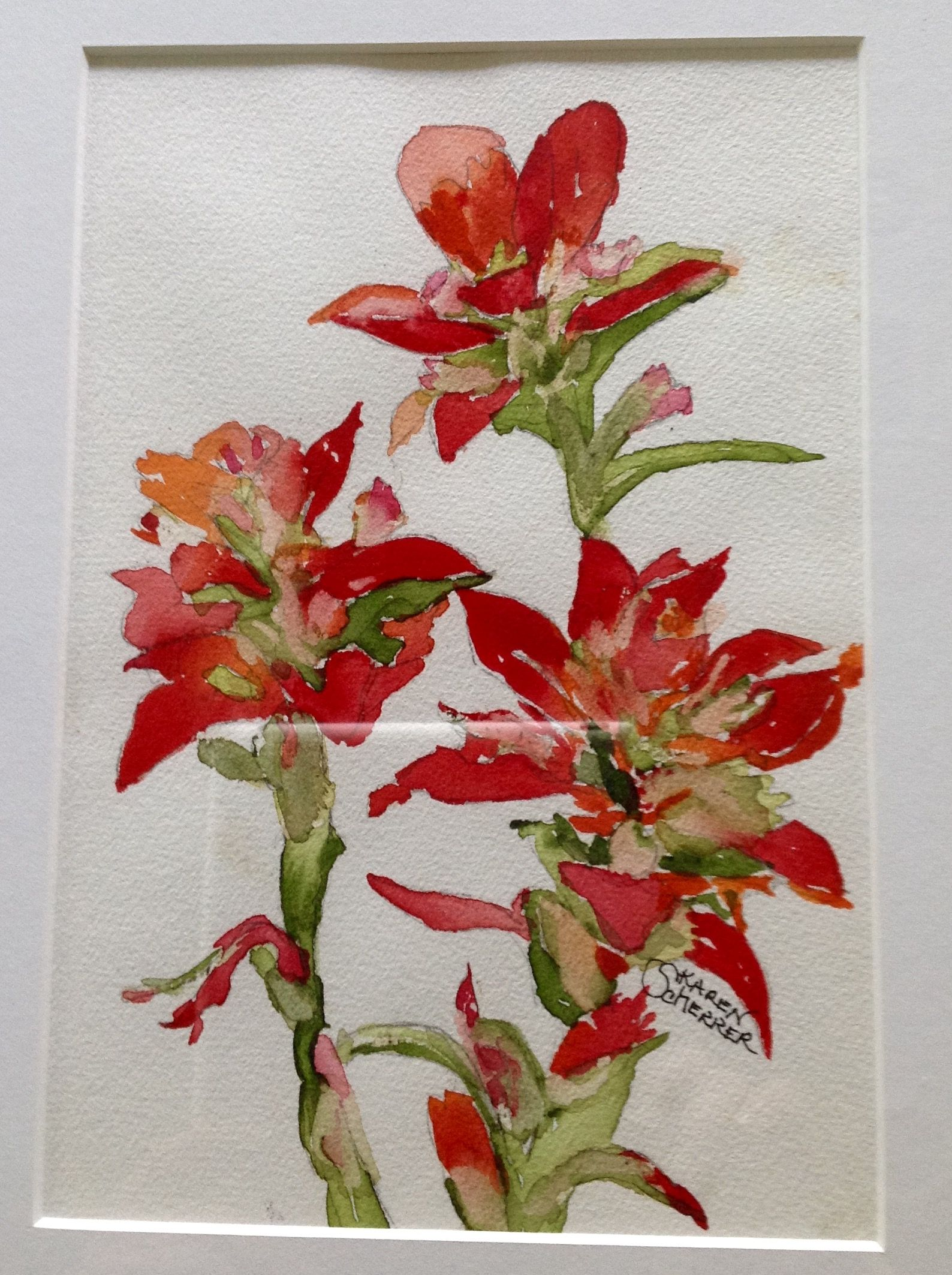 Watercolor artist in texas -  Indian Paintbrush By Texas Watercolor Artist Karen Scherrer