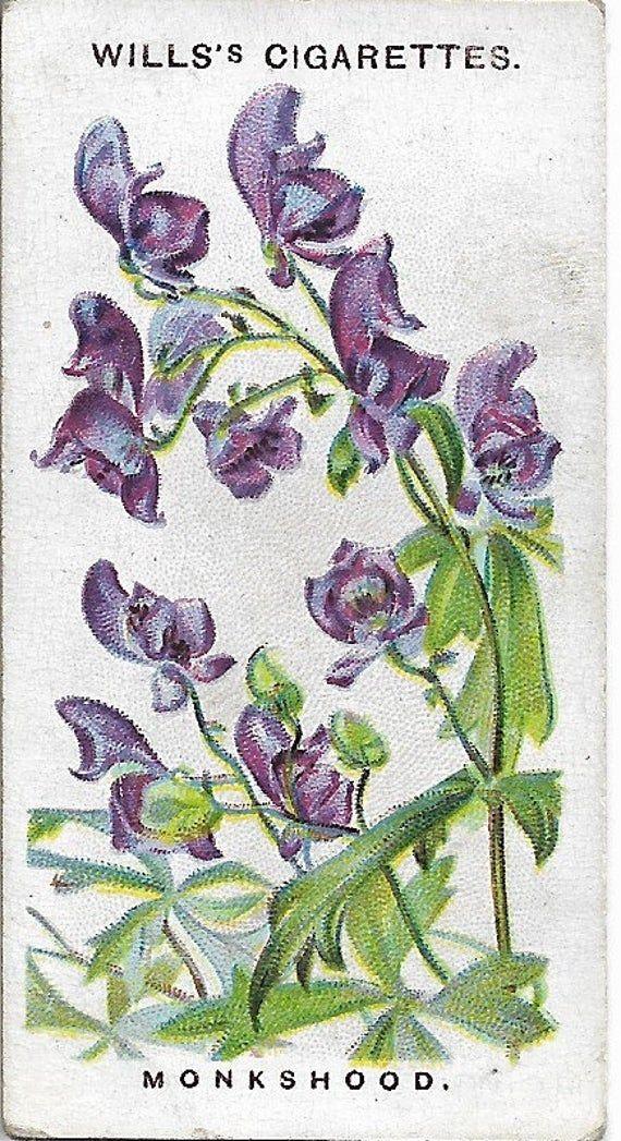 Photo of Old English Garden Flowers 1911 Wills's Cigarette Card 18 – Monkshood