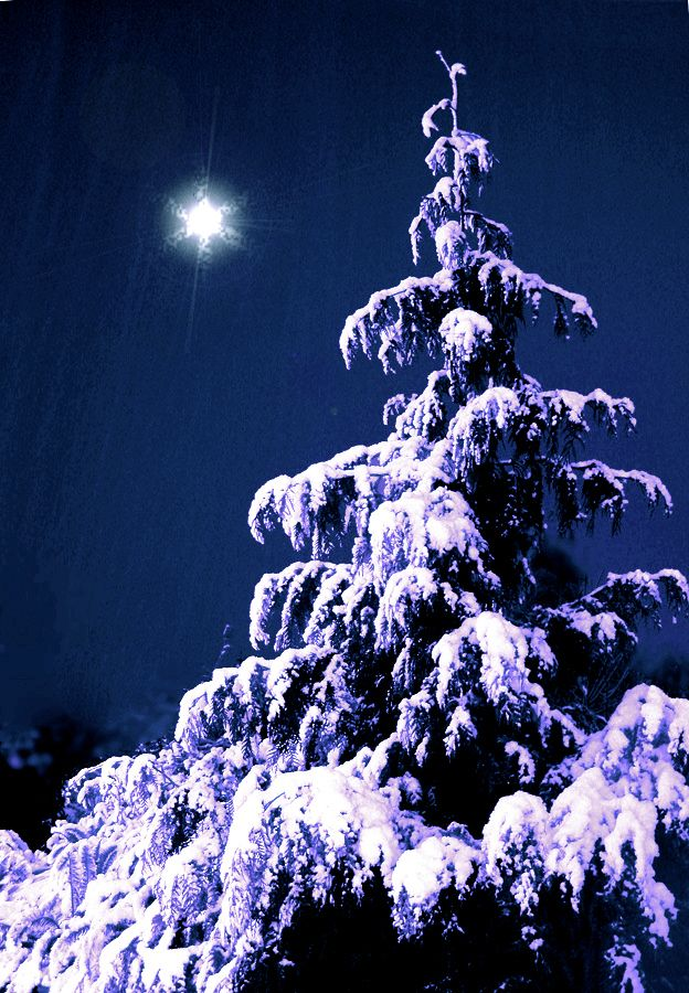 the christmas tree outdoor Winter Wonderland Pinterest The