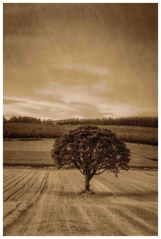 """Marmont Hill MH-MWW-SCWTZ-100-C-60 60 Inch x 40 Inch """"Lone Tree at Sunset"""" Gicle Home Decor Wall Decor Canvas Art"""