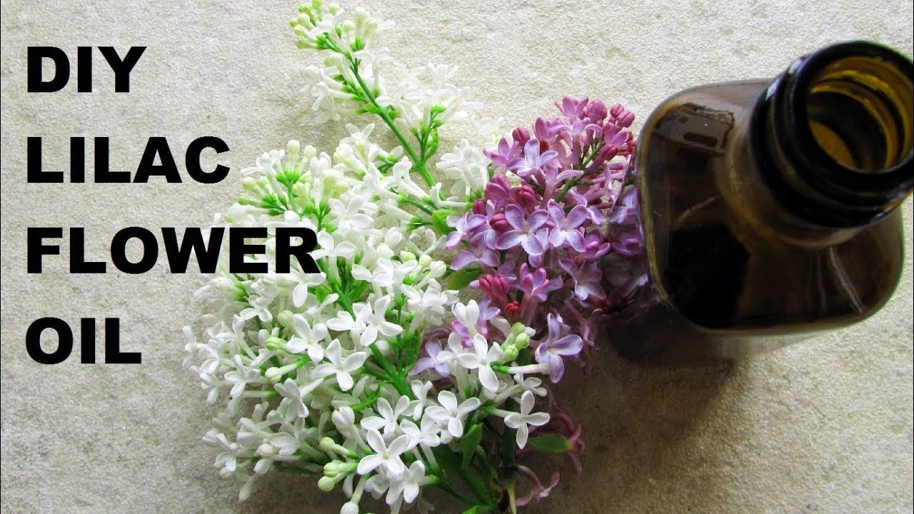 DIY Make Your Own All Natural Organic Lilac Oil (With